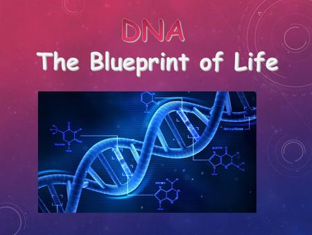  DNA contains the instructions (codes) for making all the proteins in the body.