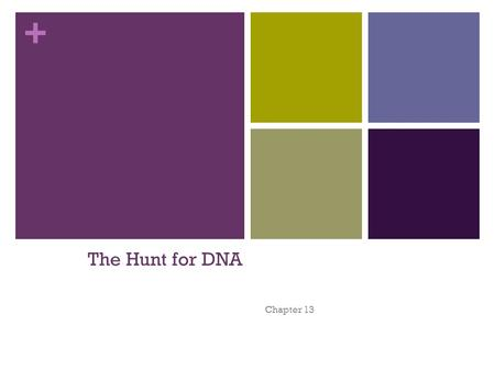+ The Hunt for DNA Chapter 13. + 1928 British scientist – Frederick Griffith - Griffith isolated 2 types of pneumonia bacteria: S strain – - R strain.
