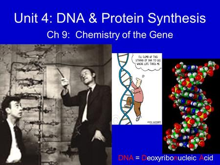 Unit 4: DNA & Protein Synthesis Ch 9: Chemistry of the Gene DNA = Deoxyribonucleic Acid.