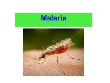 Malaria. Instructional Objectives: At the end of the lecture the student would be able to: 1-Demonstrate the main clinical characteristics of Malaria.