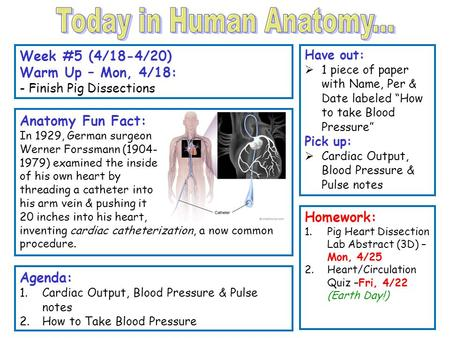 "Week #5 (4/18-4/20) Warm Up – Mon, 4/18: - Finish Pig Dissections Have out:  1 piece of paper with Name, Per & Date labeled ""How to take Blood Pressure"""