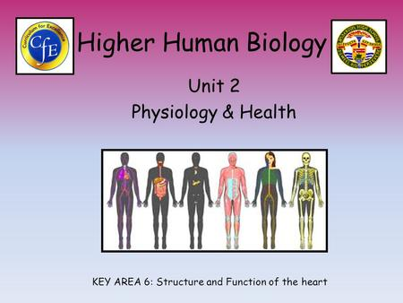 Higher Human Biology Unit 2 Physiology & Health KEY AREA 6: Structure and Function of the heart.