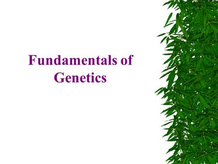 Fundamentals of Genetics. Gregor Mendel  Gregor Mendel was a monk in mid 1800's who discovered how genes were passed on.  He used peas to determine.