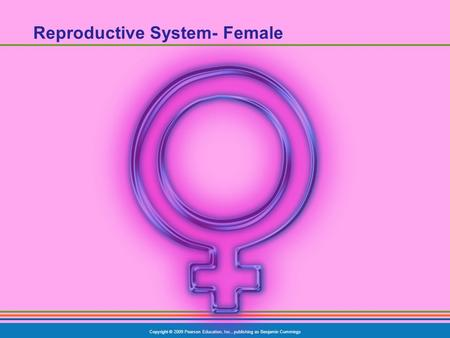 Copyright © 2009 Pearson Education, Inc., publishing as Benjamin Cummings Reproductive System- Female.