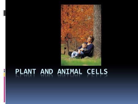 PLANT AND ANIMAL CELLS.