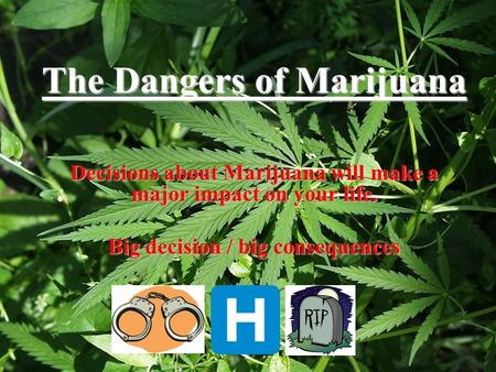 The Dangers of Marijuana Decisions about Marijuana will make a major impact on your life. Big decision / big consequences.