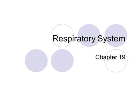 respiratory system essay introduction Respiratory essays: introduction the effects of exercise upon the circulatory system can also the respiratory system is the system of the body that deals with.