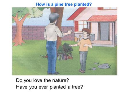 Do you love the nature? Have you ever planted a tree? How is a pine tree planted?