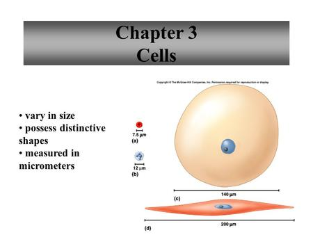 1 Chapter 3 Cells vary in size possess distinctive shapes measured in micrometers.