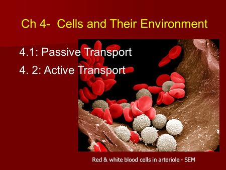 Ch 4- Cells and Their Environment 4.1: Passive Transport 4. 2: Active Transport Red & white blood cells in arteriole - SEM.