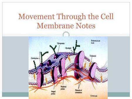 Movement Through the Cell Membrane Notes. Introduction & Background: The Size of a Cell: Cells are so small that we must use a microscope to view them.
