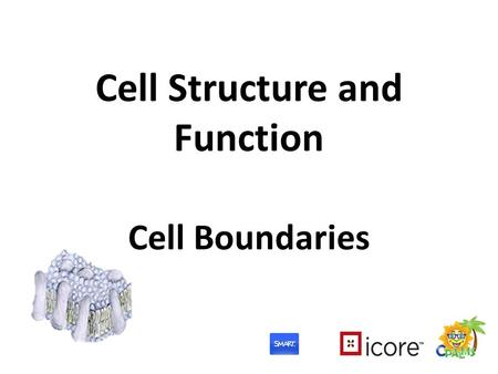 Cell Structure and Function Cell Boundaries. What Are We Learning? Benchmark: SC.912.L.14.2 –...Relate structure to function for the components of plant.