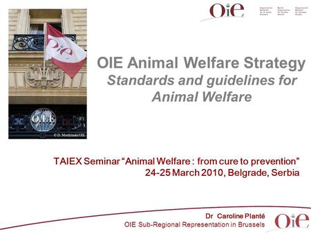 "OIE Animal Welfare Strategy Standards and guidelines for Animal Welfare Dr Caroline Planté OIE Sub-Regional Representation in Brussels TAIEX Seminar ""Animal."