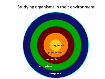 organism biosphere Bio biosphere ecosystem community population Studying organisms in their environment organism.