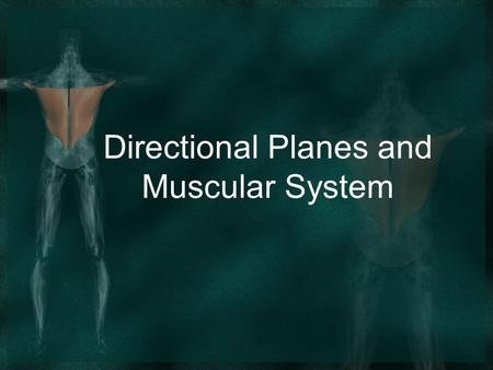 Directional Planes and Muscular System. Chapter 62 Directions, Planes, and Regions Directional Terms Anterior or ventral – front side of the body. Posterior.