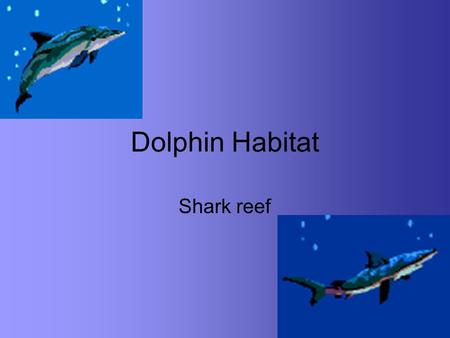 Dolphin Habitat Shark reef. Dolphin Kingdom: Animalia Phylum: Chordata Class: Mammalia Order: Cetacea (Cetus = a whale) Includes whales, dolphins, and.