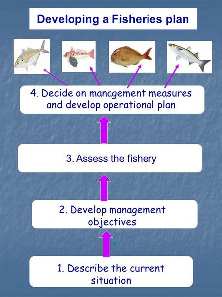 Developing a Fisheries plan 4. Decide on management measures and develop operational plan 1. Describe the current situation 2. Develop management objectives.