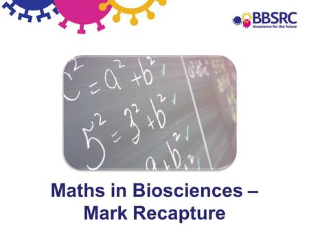 Maths in Biosciences – Mark Recapture. Mark-recapture - Predicting and protecting our pollinators Mark-recapture bees pollination conservation distribution.