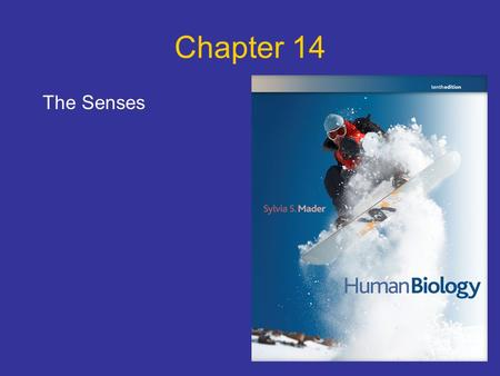 Chapter 14 The Senses.