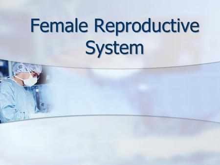 Female Reproductive System. Warm-Up Mrs. Thomas, a 53 year old female, comes to the doctor's office and says she thinks she may be in menopause. Read.