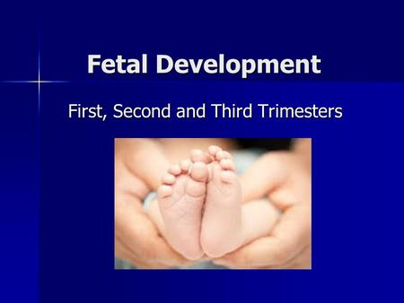 Fetal Development First, Second and Third Trimesters.