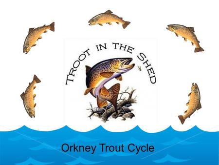 Orkney Trout Cycle. Egg Spawning Trout lay their eggs in nests in river gravels, known a redds. The female builds the nest, usually between November and.