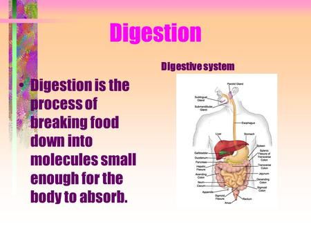 Digestion Digestion is the process of breaking food down into molecules small enough for the body to absorb. Digestive system.