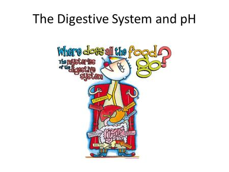 The Digestive System and pH. Digestive System The digestive system is responsible for processing food, breaking it down into usable proteins, carbohydrates,