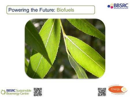 Powering the Future: Biofuels. Activity: Biofuel feedstocks Classify biofuel feedstocks Compare biofuel feedstocks Suggest the pros and cons of biofuel.