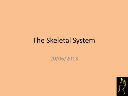 The Skeletal System 20/06/2013 Starter Discussion: What do you know about the skeletal system?