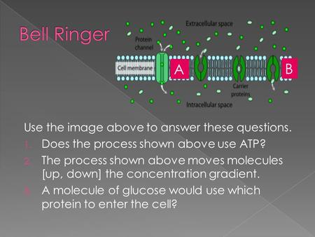 Use the image above to answer these questions. 1. Does the process shown above use ATP? 2. The process shown above moves molecules [up, down] the concentration.