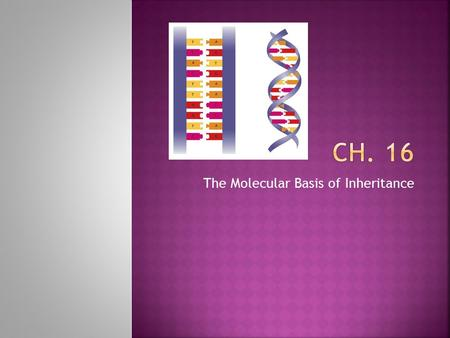 The Molecular Basis of Inheritance.  Your DNA – contained in 46 chromosomes you inherited from your parents in mitochondria you inherited from your mother.
