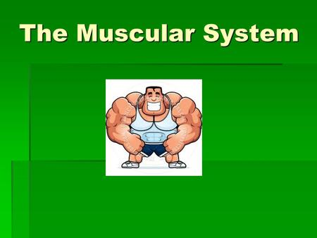 The Muscular System. Muscular System  The body has more than 600 muscles that make up 40 to 45% of the body's weight.