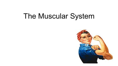 The Muscular System. The muscular system works with the skeletal system You have approximately 650 muscles in your body.
