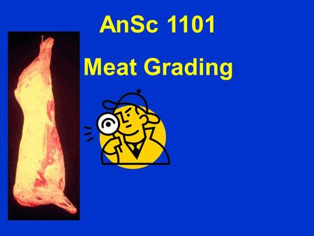 AnSc 1101 Meat Grading. Outline Retail yield Inspection vs. grading Carcass Anatomy Quality Grading Yield Grading.
