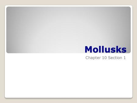 Mollusks Chapter 10 Section 1. Characteristics of Mollusks Clams, oysters, scallops, snails, squids Invertebrates with soft, unsegmented bodies Often.