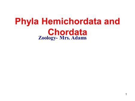 1 Phyla Hemichordata and Chordata Zoology- Mrs. Adams.