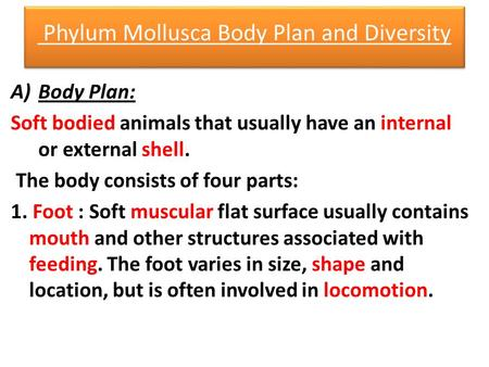 Phylum Mollusca Body Plan and Diversity A)Body Plan: Soft bodied animals that usually have an internal or external shell. The body consists of four parts: