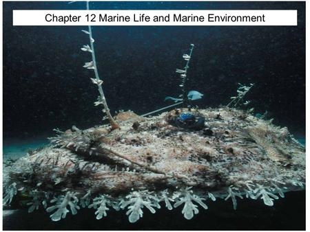 © 2014 Pearson Education, Inc. Chapter 12 Marine Life and Marine Environment.