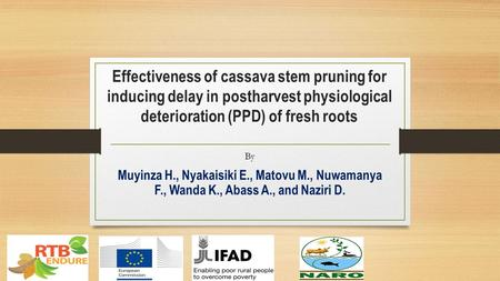 Effectiveness of cassava stem pruning for inducing delay in postharvest physiological deterioration (PPD) of fresh roots By Muyinza H., Nyakaisiki E.,