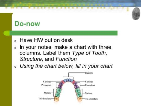 Do-now o Have HW out on desk o In your notes, make a chart with three columns. Label them Type of Tooth, Structure, and Function o Using the chart below,