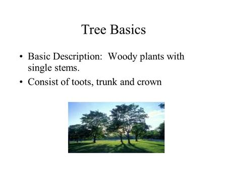 Tree Basics Basic Description: Woody plants with single stems. Consist of toots, trunk and crown.