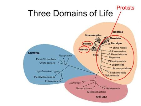 Three Domains of Life Protists