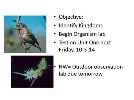 Objective: Identify Kingdoms Begin Organism lab Test on Unit One next Friday, 10-3-14 HW= Outdoor observation lab due tomorrow.