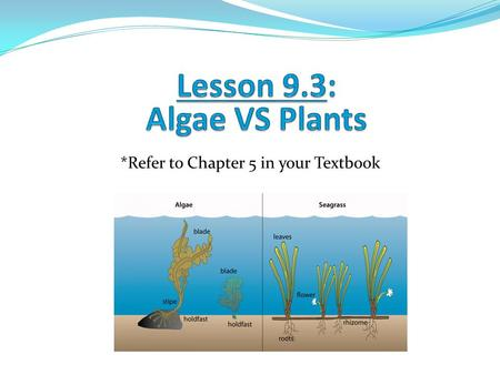 Lesson 9.3: Algae VS Plants