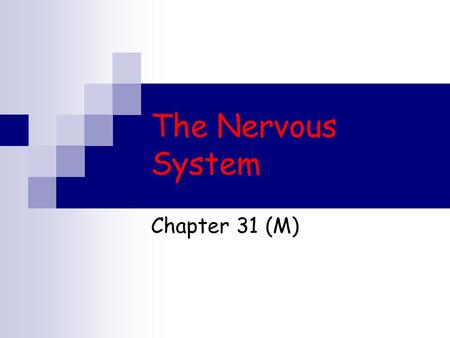 The Nervous System Chapter 31 (M). Functions of the Nervous System The nervous system collects information about the body's internal and external environment,