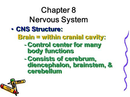 Chapter 8 Nervous System CNS Structure: Brain = within cranial cavity: -Control center for many body functions -Consists of cerebrum, diencephalon, brainstem,