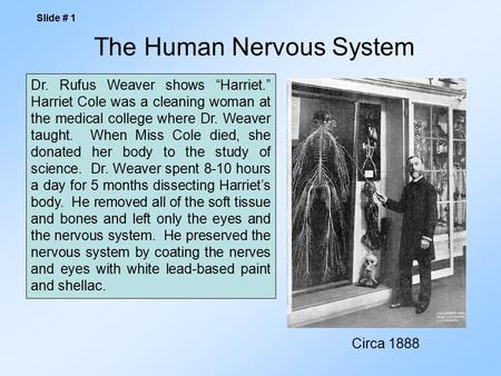 "The Human Nervous System Slide # 1 Dr. Rufus Weaver shows ""Harriet."" Harriet Cole was a cleaning woman at the medical college where Dr. Weaver taught."