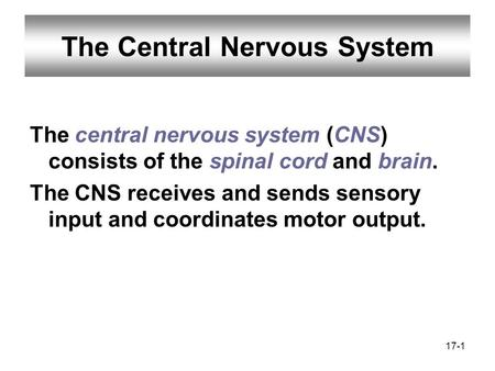 17-1 The Central Nervous System The central nervous system (CNS) consists of the spinal cord and brain. The CNS receives and sends sensory input and coordinates.