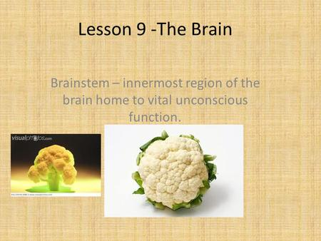 Lesson 9 -The Brain Brainstem – innermost region of the brain home to vital unconscious function.